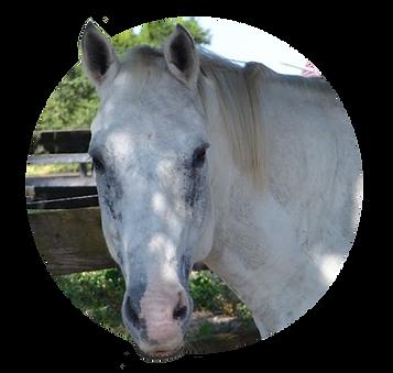 Horses_Cowboy.png