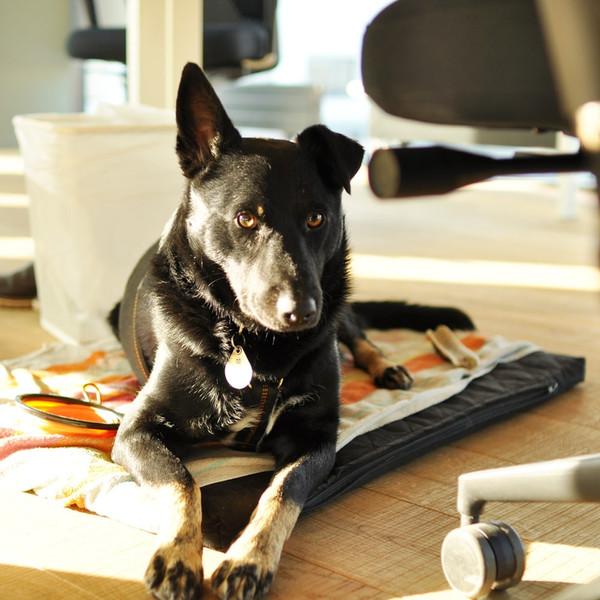 office-dog-better-ventures-group.jpg
