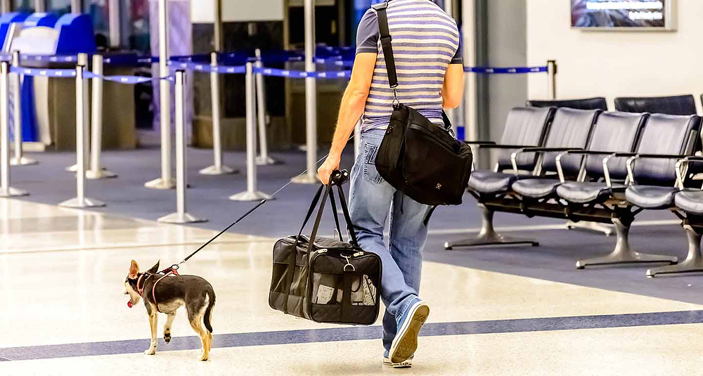 Flight Online Booking for Pet Travel Tips