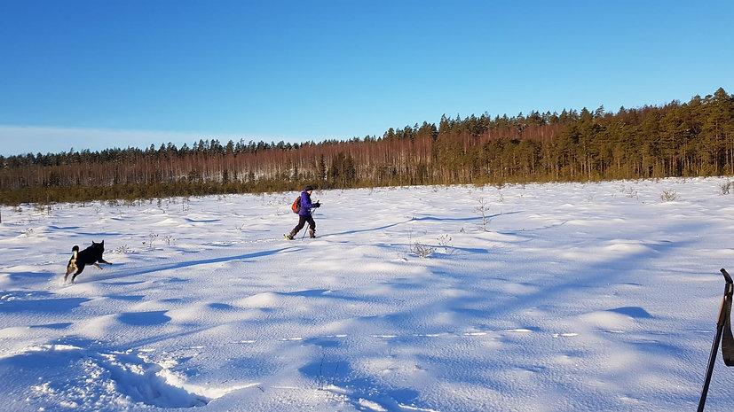 Lumikenkäilyä suolla.jpg