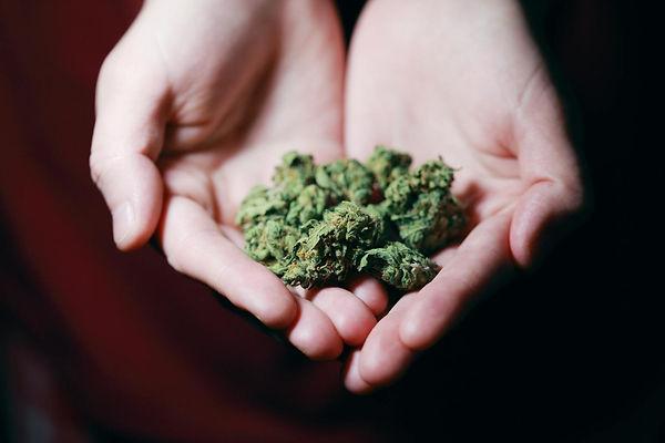 cannabis-bud-hand.jpg