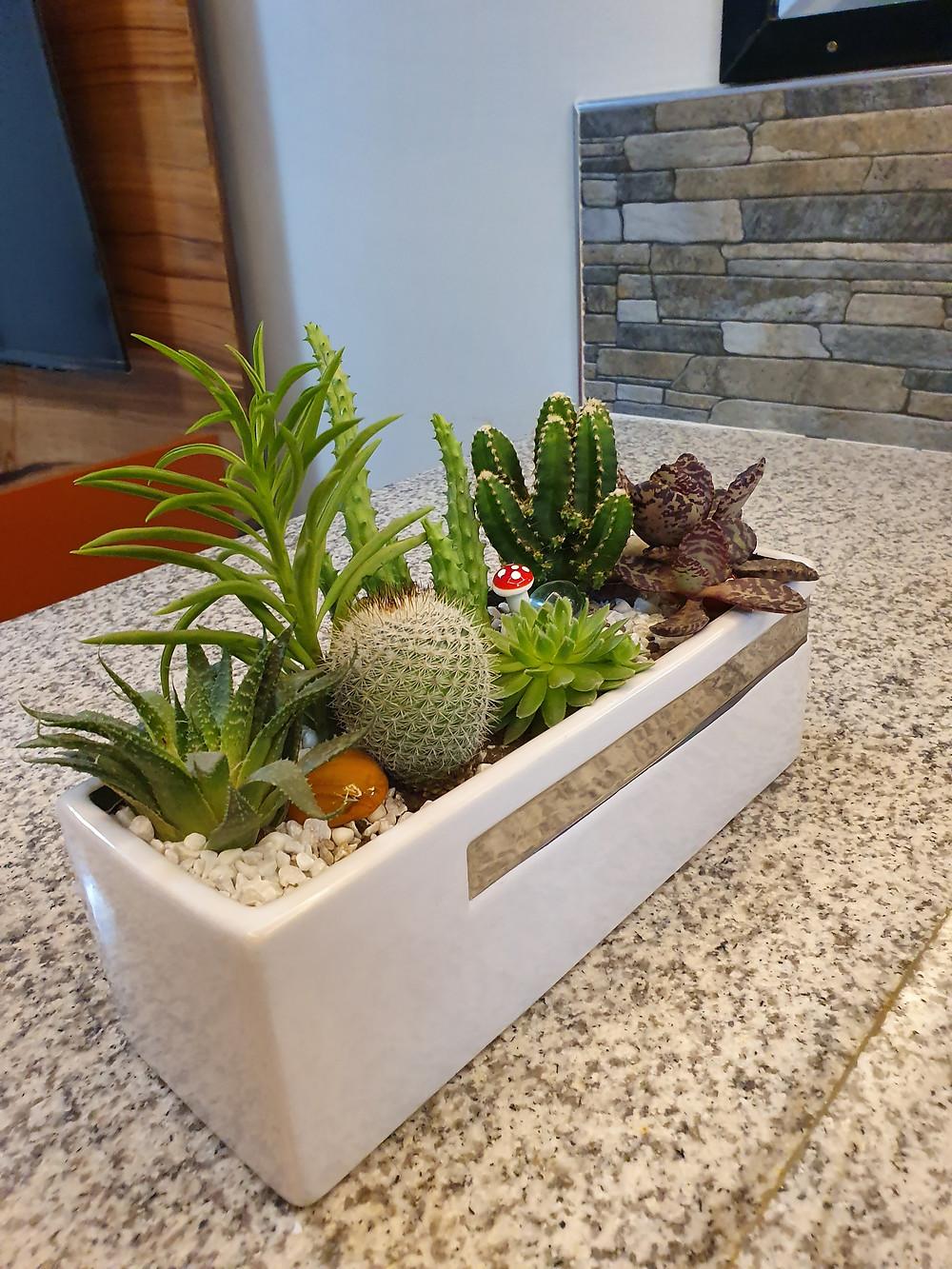 Setting Up Succulent Plant