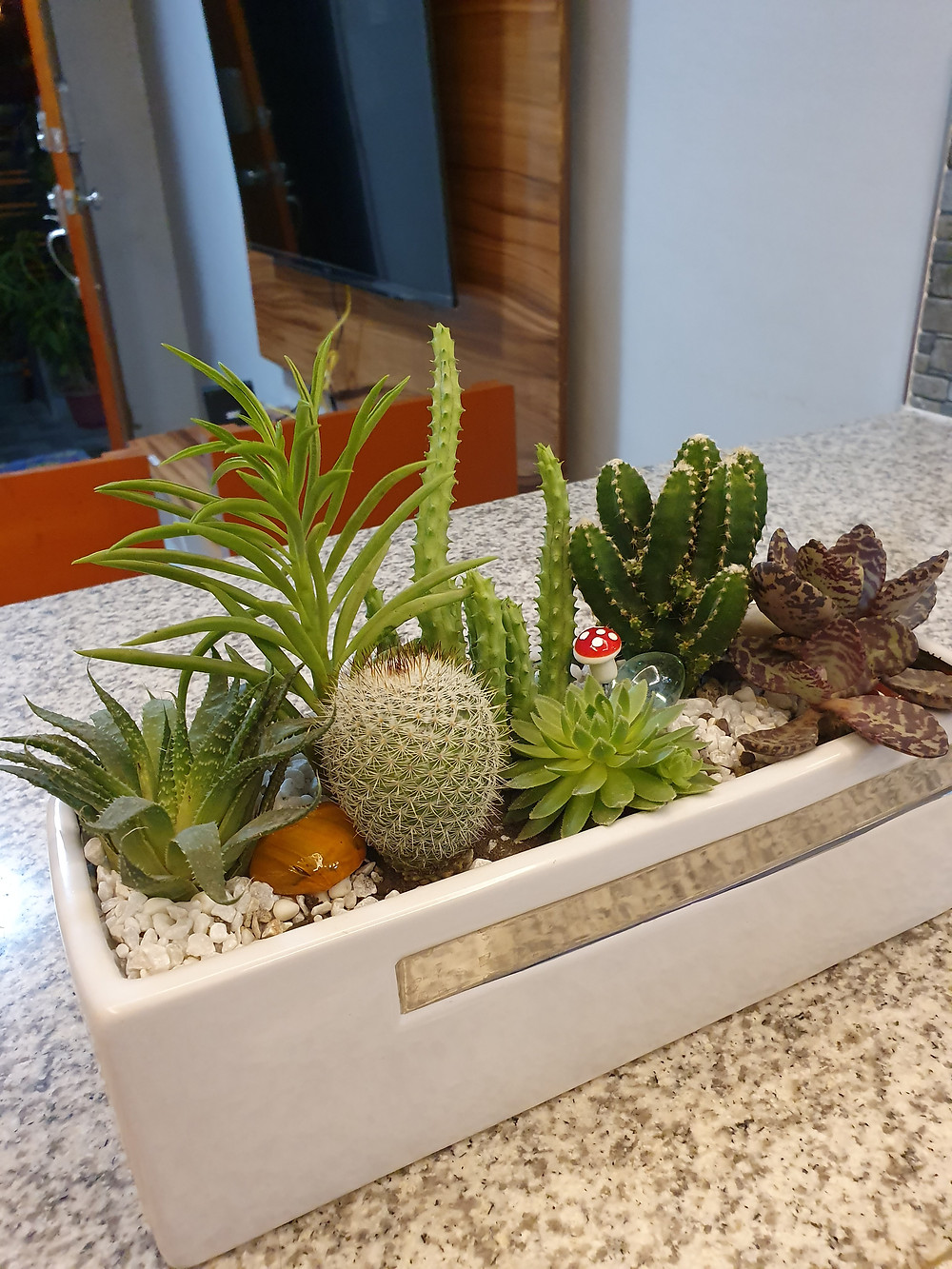 How to Care Succulent