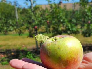 Afternoon Out: Beardsley's Cider Mill & Orchard
