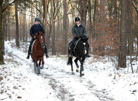 Debunking Winter Horse-Care Myths
