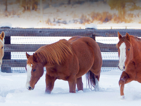 WEATHERING WINTER HORSE CARE TIPS