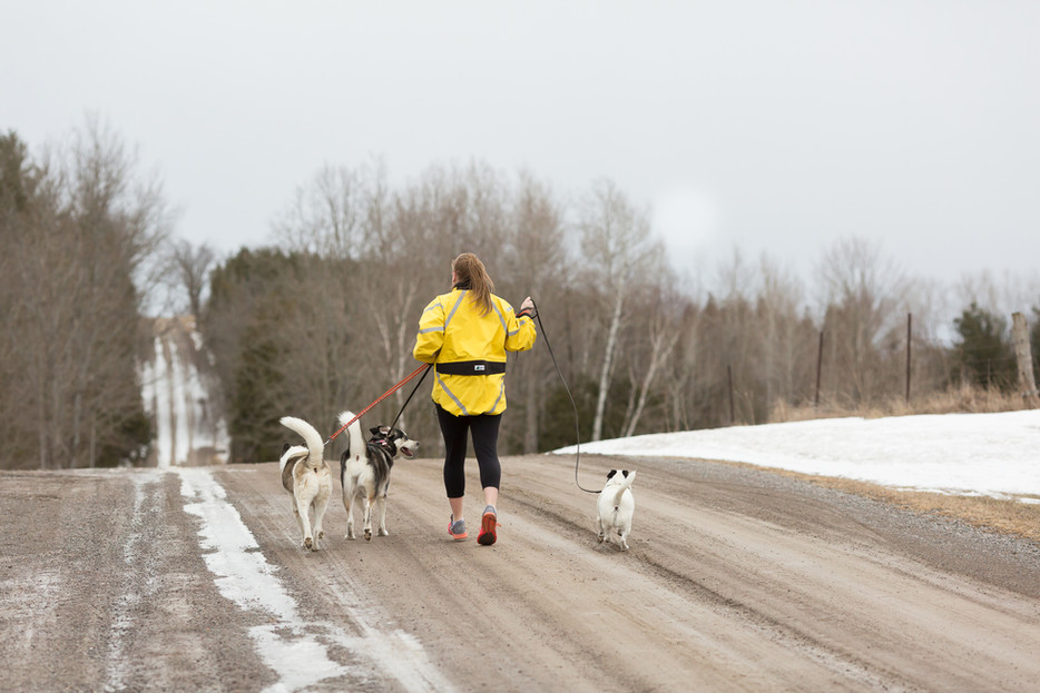Health practitioner running with dogs in Ontario, Canada, during personal branding photos with Melissa Anthony