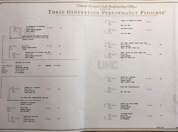 Natural ukc pedigree.JPG