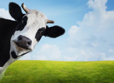 Cow's milk (dairy) allergy
