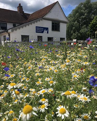 Ad wildflowers practice.JPG