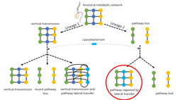 Model of endosymbiont gene transfer supplementing a missing metabolic pathway.