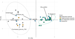 Principal component analysis plot clustering organisms by genes related to their capacity for phagoc