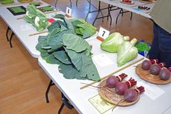 2017 KHS Summer Show - Kidderminster Horticultural Society - 014