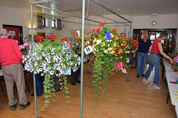 2017 KHS Summer Show - Kidderminster Horticultural Society - 009