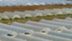 Video-surveillance-des-zones-agricoles.j