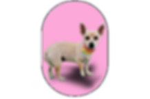 All Off Terrier Pic Small.png