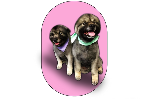 example of work keeshond.png