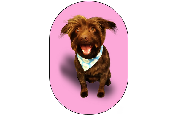 terrier picture.png