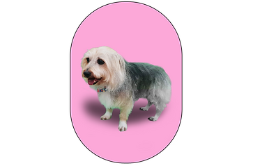 FG terrier x.png