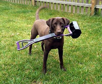 Dog with pooper scooper.jpg