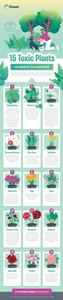 15 Toxic Plants to Avoid if You Have Pets