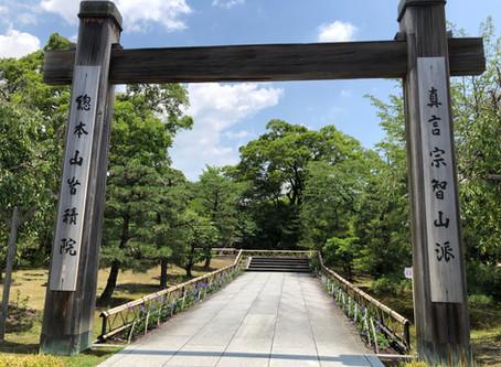 京都アジサイ巡り:智積院