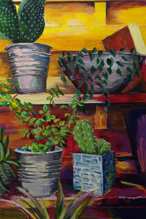 Etagères plantes