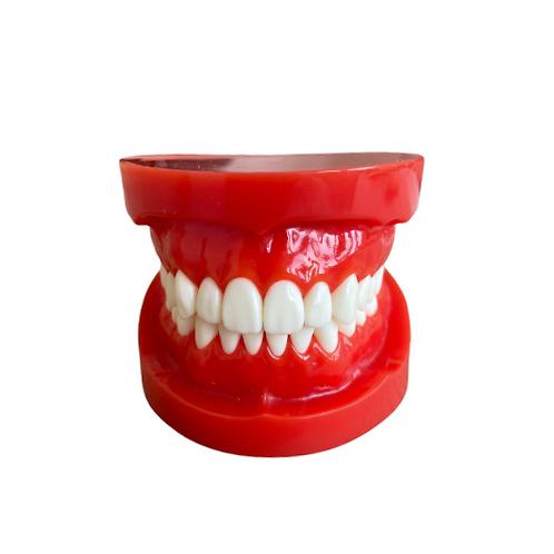 Anatomiemodel tanden + classificatie