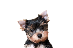 puppy-1704482_1920_edited_edited.png