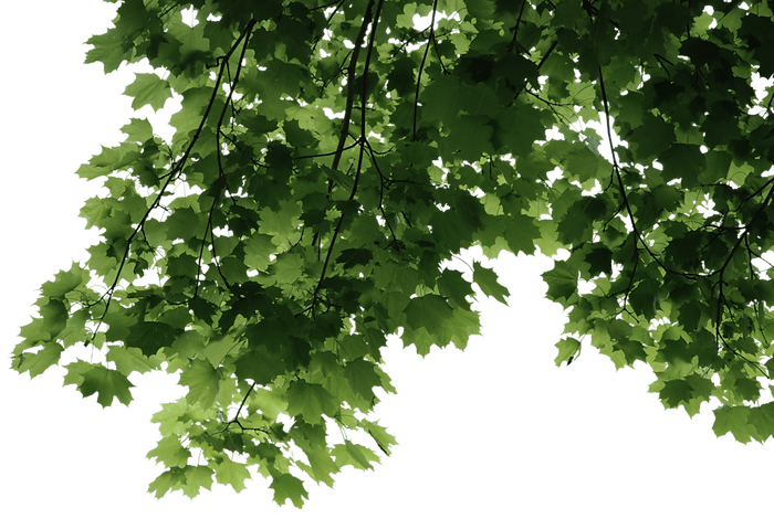 leaves-transparent-png-2_edited.png
