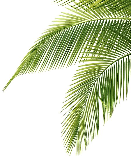 palm-png-43080.png