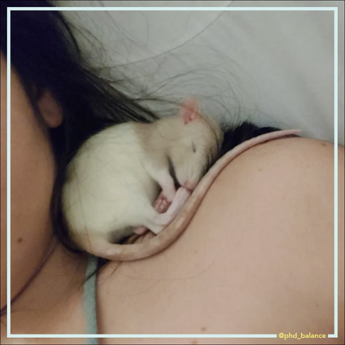 Encourage Adopting Ratpanions