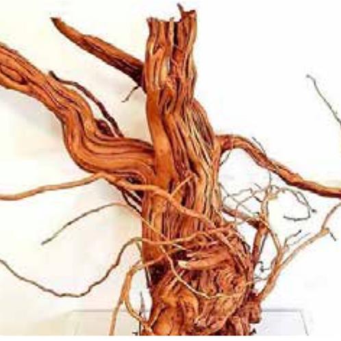 Meijing   Azalea Wood-S Shape JUMBO 60-100cm