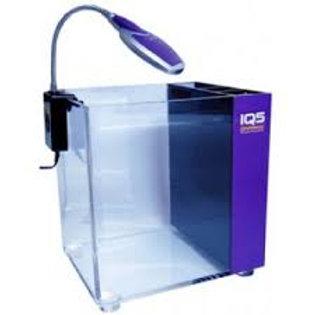 Dymax IQ5 Purple Amethyst