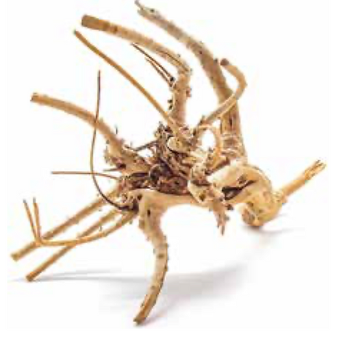 Meijing Spider Wood SMALL 20-40cm