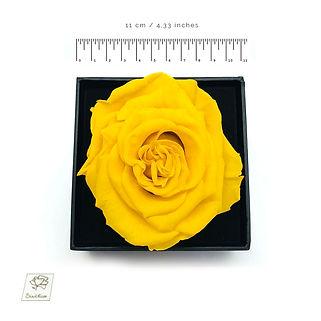 yellow preserved rosebox