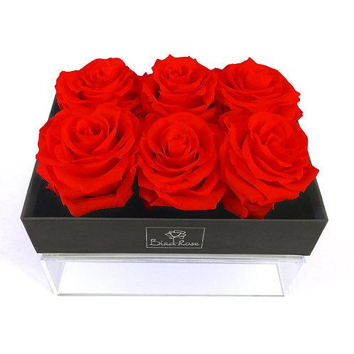 Colección Bouquet