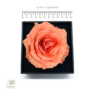 coral preserved rose