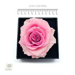 lila preserved rose