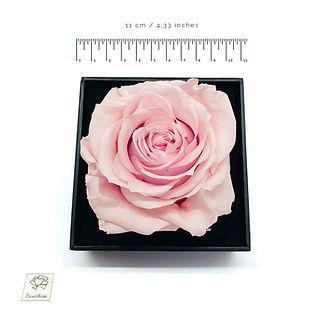 pink-haltbare-rose-bird-rose.jpg