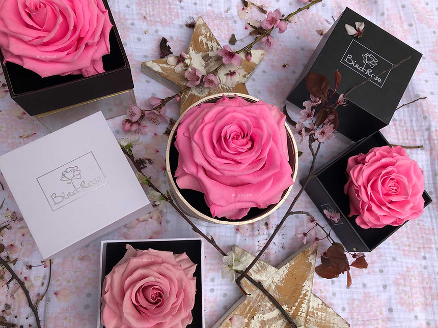 rosas-rosadas-infinitas-preservadas-bird