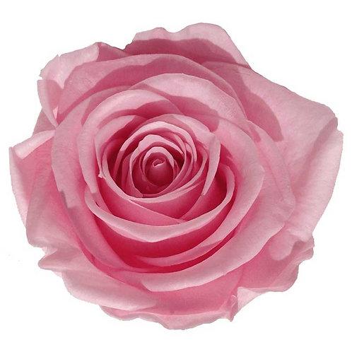 Rosa Rosada - Grande