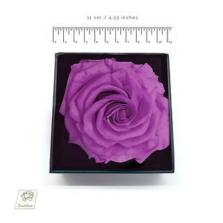 purple preserved rose
