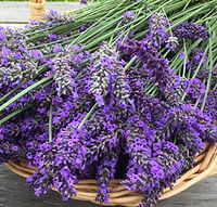 Lavender, Port Townsend