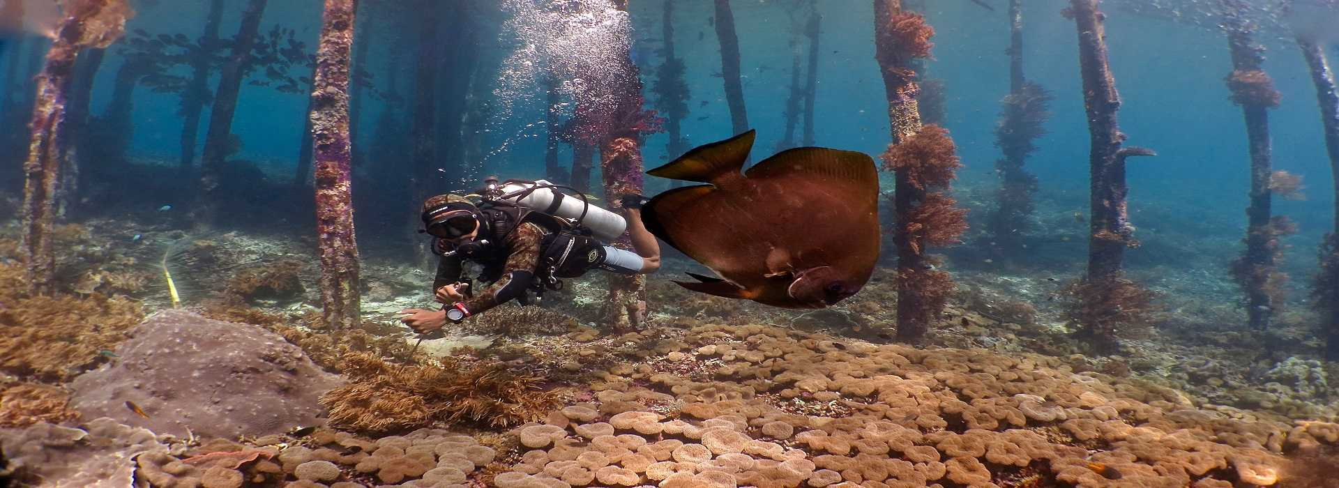 Plongée / chasse sous marine (Mitsio)