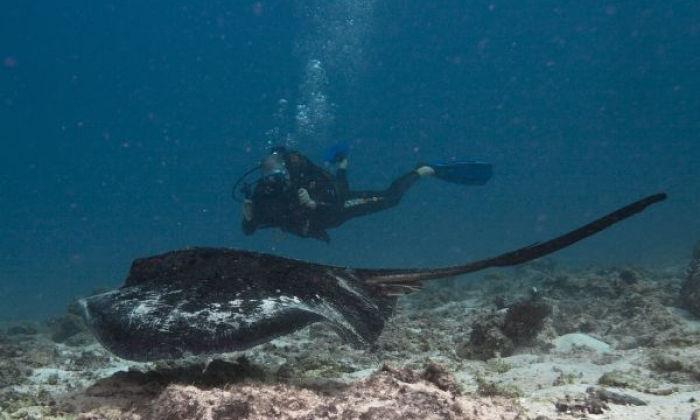 Plongée / chasse sous marine (Nosy Bé)