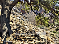 Gorges de Zachros 10