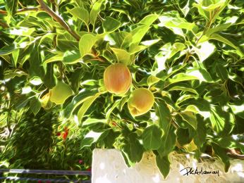 FRUITS - KARYDI.png