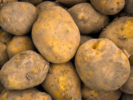 清水農園で今大人気!甘くておいしい幻のジャガイモ「インカのめざめ」とは