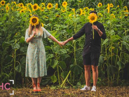 Crewe Green Sunflowers